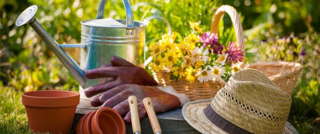 ストレス社会で生きるあなたに!簡単癒しのおすすめのプチ園芸のイメージ画像